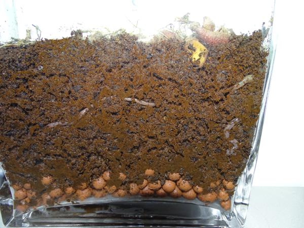 الديدان النشطة في التربة المحاكاة للمريخMSC 1A ، لاحظ الرخام الطيني المستخدم للصرف، في التجارب القادمة سنستخدم الصخور الصغيرة من الـMMS الجديد المحاكي لذلك، هنا تتمتع الديدان بعلف البطاطس.