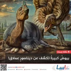 بيوض كبيرة تكشف عن ديناصور عملاق!