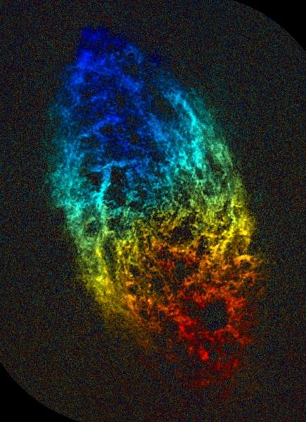 تُظهر هذه الصورة الملتقطة بواسطة نظام التلسكوبات الراديوية (Very Large Baseline Array (VLBA كيف كانت ستبدو مجرة M33 لو كنا نستطيع رؤيتها بالموجات الراديوية. وتُظهر الخريطة غاز الهيدروجين الذرّيّ في المجرة. كما تمثّل الألوان المختلفة سرعات مختلفة للغاز: الأحمر هو الغاز الذي يتحرك بعيدًا عنا، والأزرق هو الذي يقترب باتجاهنا. المصدر: NRAO/AUI.