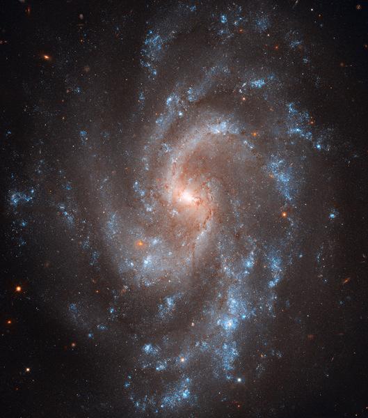 وكالة الفضاء الأمريكية (ناسا)، وكالة الفضاء الأوروبية (إيسا)، آدم ريس (معهد علوم تلسكوب الفضاء/جامعة جونز هوبكنز) إل. ماكري (جامعة تكساس إيه آند أم)، وفريق تراث هابل (معهد علوم تلسكوب الفضاء/رابطة الجامعات لأبحاث الفلك) مجرة NGC 5584الملتقطة بواسطة الكاميرا واسعة النطاق 3 (WFC3) على متن تلسكوب هابل يرسم الضوء الأزرق اللامع الصادرعن النجوم الشابة شكل الأذرع اللولبية الجميلة التي تُميز مجرة 5584 NGC. كما تظهر العديد من خطوط الغبار الرقيقة وهي تنساب من قلب المجرة ذي اللون المائل إلى الصُفرة حيث تُوجد النجوم الأقدم. أما النِقاط الحمراء المنتشرة في الصورة فهي بشكل عام مجرات أخرى بعيدة.