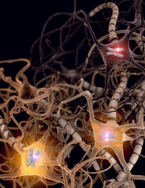 تفعل العديد من الخلايا في الدماغ نسختين من كل جين، إحداها موروثة من الأب والأخرى من الأم، وبعض الخلايا الآخرى يفعل نسخة واحدة. وإذا حصل وكانت النسخة المفعلة تحوي طفرة جينية، قد تجعل من الخلية خلية مريضة. يوفر الاكتشاف الجديد من جامعة يوتا نظرة دقيقة لم يسبق اكتشافها من قبل للجينات التي تحدث فروقًا على المستوى الخلوي