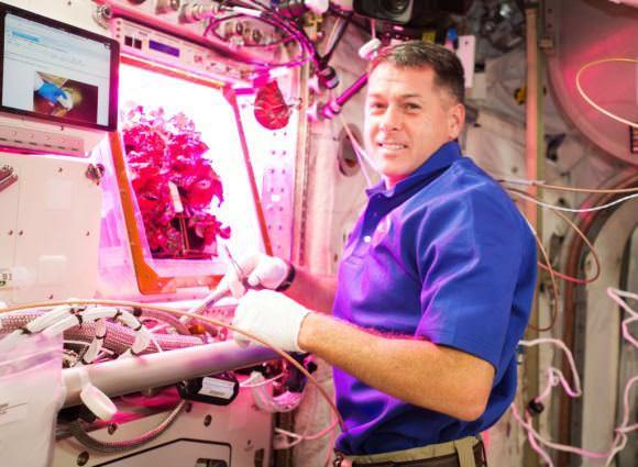 رائد الفضاء شين كيمبرو يقوم بحصاد الخس من 'فيجي' على محطة الفضاء الدولية. حقوق الصورة: وكالة ناسا NASA .