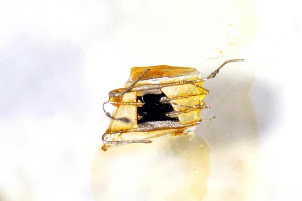 ناندا غونزانغ Nanda Gonzague لمجلة كوانتا Quanta عينة من أكسيد النحاس الإيتريوم باريوم، واحدة من فئات المواد البلورية (الكريستالية) وتدعى cuprates أو النحاس المطلي وهو أقوى أنواع الموصلات الفائقة