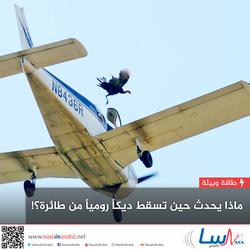 ماذا يحدث حين تسقط ديكاً رومياً من طائرة؟!
