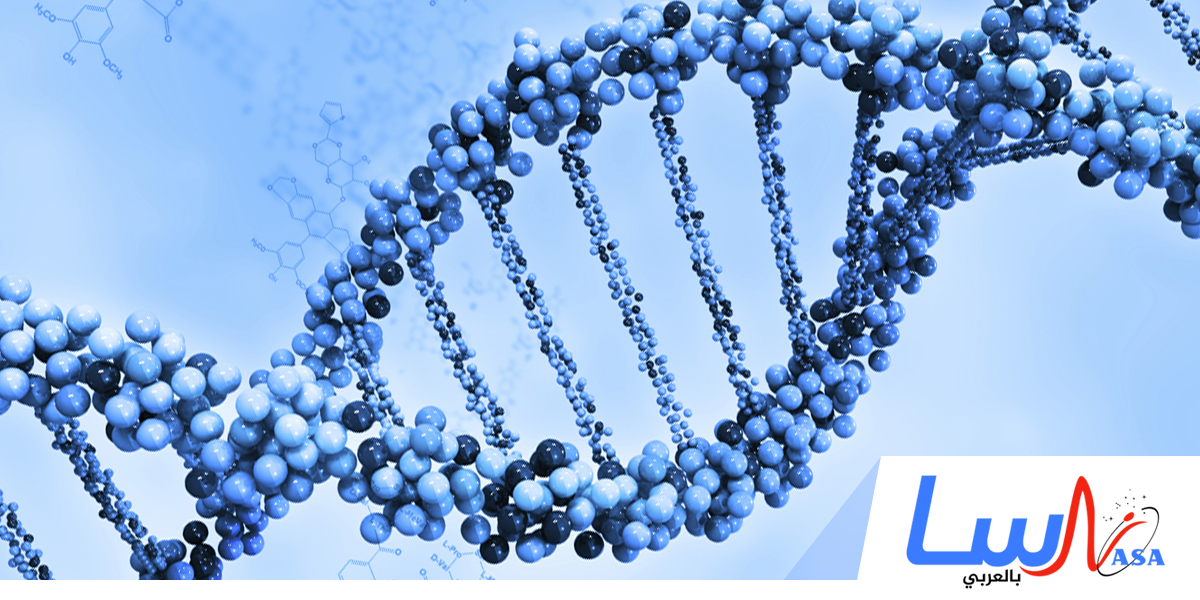نشر أولى الصور للكروموسومات والجينات