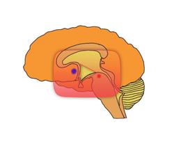 علوم الأعصاب خلال دقيقتين: نظام الثواب