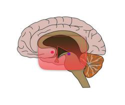 علوم الأعصاب خلال دقيقتين: آثار الكوكائين على الدماغ