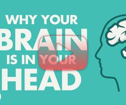 لماذا دماغك موجود في رأسك؟