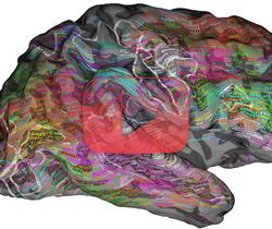 قاموس الدماغ