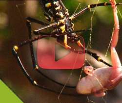العنكبوت في مواجهة الضفدع ... لن تجري الأمور كما تتوقعون!