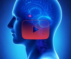 علوم الأعصاب خلال دقيقتين: اللوزة