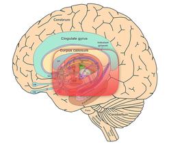 علوم الأعصاب خلال دقيقتين: الجهاز الحُوفيّ