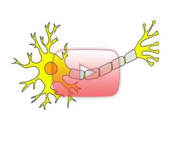 علوم الأعصاب خلال دقيقتين: النخاعين
