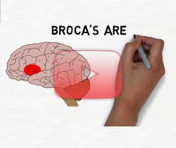 علم الأعصاب خلال دقيقتين: باحة بروكا