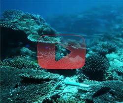 مشهد جديد للشعاب المرجانية