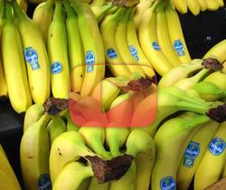 !الموز يخسر المعركة أمام الفطر