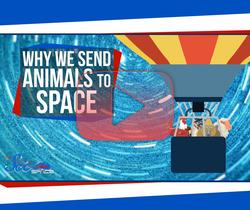 لماذا نرسل الحيوانات إلى الفضاء؟
