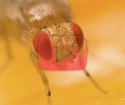 ذباب الفاكهة في محطة الفضاء الدولية